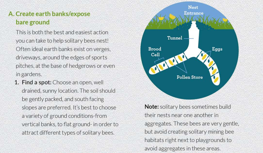 bee habitat 1