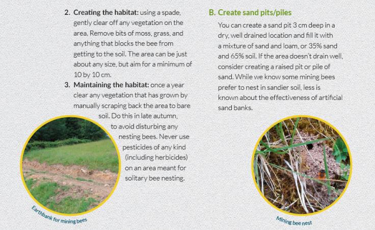bee habitat 2
