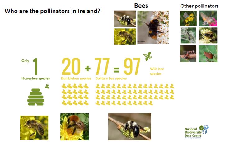 irish pollinators